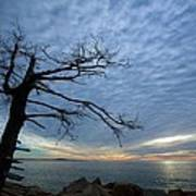 Dead Tree At Otter Cliffs Art Print