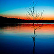 Dead Tree Beauty At Sunset Over Table Rock Lake Art Print
