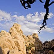 Dead Tree Limb Hanging Over Rocky Landscape In The Mojave Desert Art Print