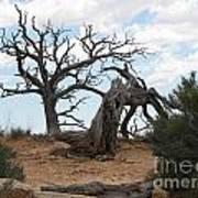 Dead Tree - Natural Bridges National Park Art Print