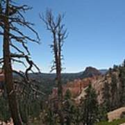 Dead Trees At Bryce Canyon Art Print
