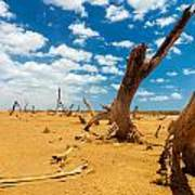 Dead Trees In A Desert Wasteland Art Print