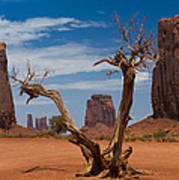 Dead Wood In Monument Valley Art Print