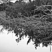 Deadfall Reflection In Black And White Art Print