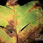 Death Of A Leaf Art Print