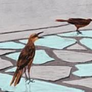Death Valley Birds Art Print by Anastasiya Malakhova