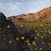 Death Valley Spring 1 Art Print