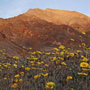Death Valley Spring 2 Art Print