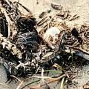 Decomposing Dead Bird Art Print