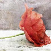 Decor Poppy Red Art Print