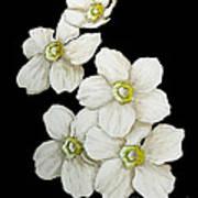 Decorative White Floral Flowers Art Original Chic Painting Madart Studios Art Print
