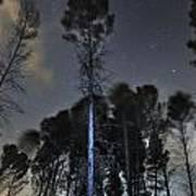 Deep Forest At Night Art Print