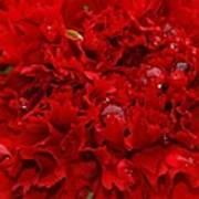 Deep Red Carnation Art Print