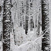 Deep Snow In The Forest Art Print