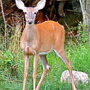 Deer 102 Art Print