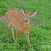 Deer 11 Art Print