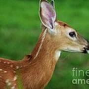 Deer 16 Art Print