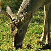 Deer 2009 Art Print