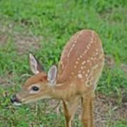 Deer 7 Art Print