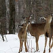 Deer Affection Art Print