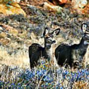 Deer Alert Art Print by Rebecca Adams