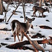 Deer And Snow Art Print