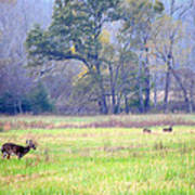 Deer At Cades Cove Art Print