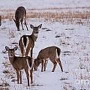 Deer At Dusk Art Print