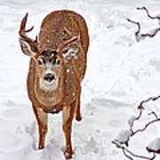 Deer Buck In Snow Art Print