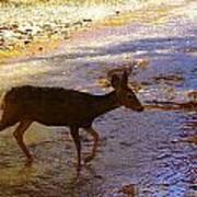 Deer Crossing Art Print