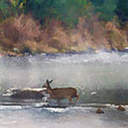 Deer Crossing Stream Panoramic Art Print