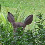 Deer Ear In A Mint Patch Art Print