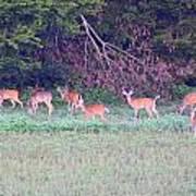 Deer-img-0128-005 Art Print