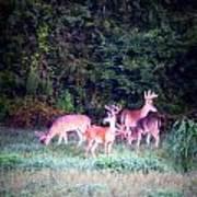 Deer-img-0158-003 Art Print