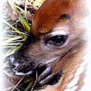 Deer-img-0349-002 Art Print