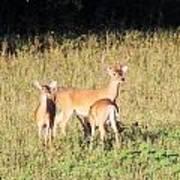 Deer-img-0642-001 Art Print