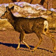 Deer In A Different Light Art Print