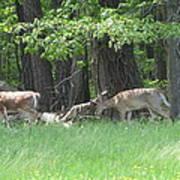 Deer In A Group Art Print