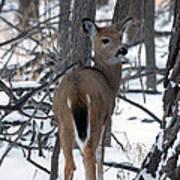 Deer In The Grove Art Print
