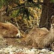 Deer In The Rockies Art Print