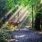 Deer In The Sun Art Print
