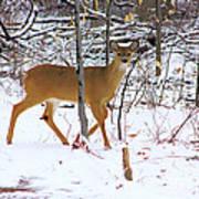 Deer In Winter 2011.no.3 Art Print