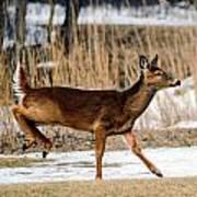 Deer Jump Art Print