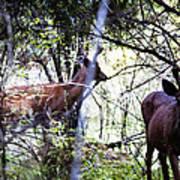 Deer Looking For Food Art Print