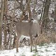Deer Of Beauty  Art Print