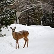 Deer On Side Of Road Art Print