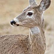 White Tail Deer Profile Art Print