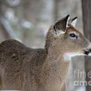 Deer Profile Art Print