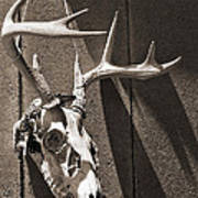 Deer Skull In Sepia Art Print by Brooke T Ryan