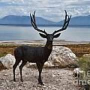 Deer Statute On Antelope Island  Art Print